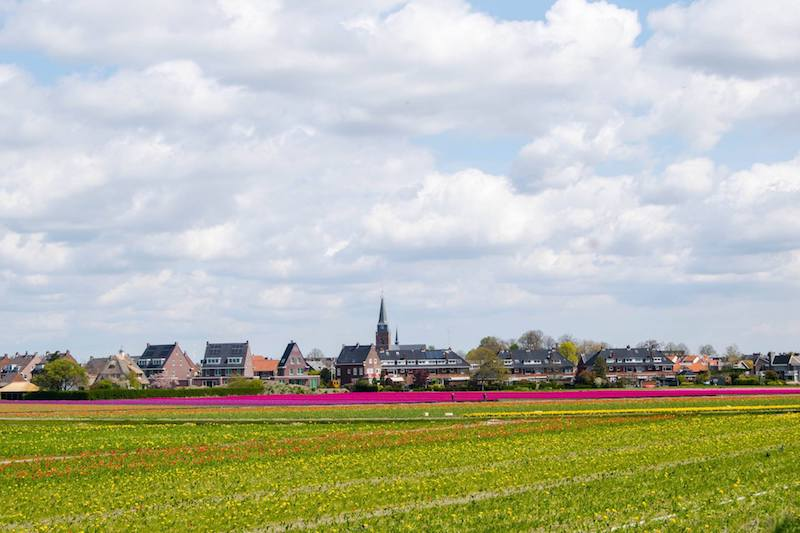 Photo of Hillegom, a town near Keukenhof with many tulip fields to visit for free in the Netherlands!