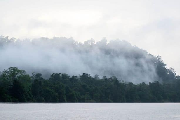 Fog over the Kinabatangan River in Borneo taken from a Kinabatangan river cruise.