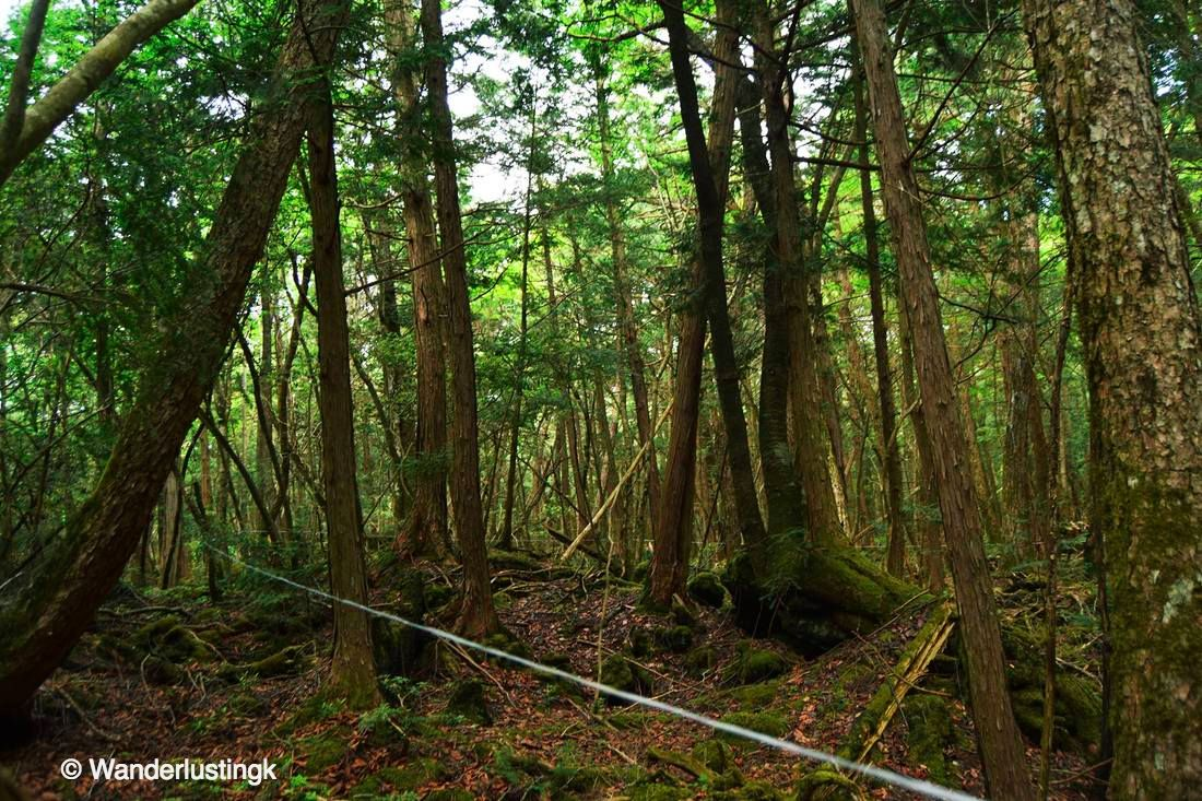 Photo of string in the Aokigahara Forest in Japan. Read about hiking in the sea of trees.